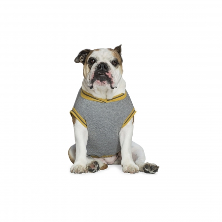 College Bulldog Grigio/Curry