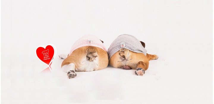 Maglioncini English bulldog