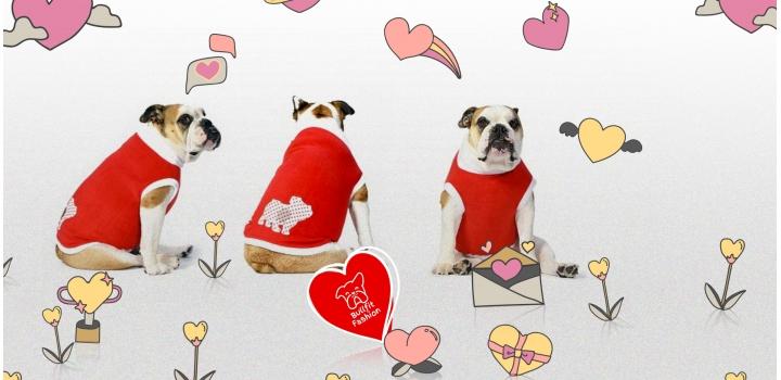 Felpe e pile French Bulldog