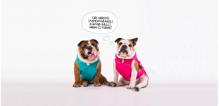 Cappottini e impermeabili English Bulldog